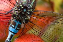 Animals - Bugs/Dragonflies / by Jan Vafa