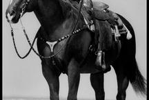 horses / by Robin Lloyd