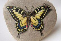 obl motýl