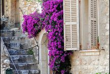 Provence / Beauties...
