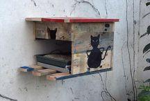 cat outdoor house