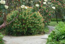Famous Gardens II