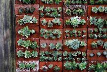 gardening / by Sue Sanders