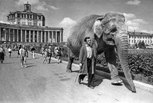 Слоны и окрестности