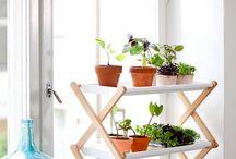 ideas para las plantas