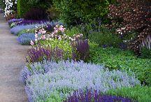 flowes in garden
