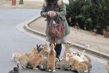 ✿⊱ Coniglietti di tutti i tipi ✿⊱