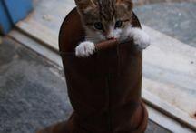 長靴を履いたねこ