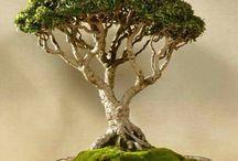 bonsai inspiration