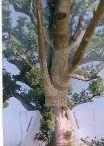 Baobabs bonsaï à planter et frangipaniers / un peu d'Afrique dans son salon en plantant un baobab! plante d'intérieur sous nos latitudes, sympbole de paix et de longévité,il est une belle idée de cadeau de naissance : plantez un arbre dans votre salon pour marquer l'arrivée de bébé!