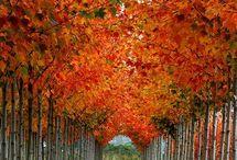 autumn colores
