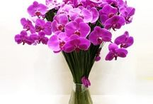 LUXURY COLLECTION / There is a moment when all you want to do is send a bouquet of flowers, not just ordinary arrangement but luxurious one. Our Luxury Collection flowers - you can be sure that your recipient will receive a luxury arrangement such as gorgeous and like no other and make this as a memorable one.