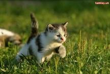 Cute Cats / by Hugo Talk