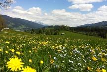 Flachau Landschaft im Frühling, Sommer und Herbst / Die Landschaft des Flachautals, verschiedene Plätze, die landschaftlich besonders reizvoll sind. #visitflachau