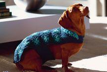 cucce - cappottini per cani e.......