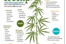 Hemp my love