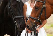 Through the Glass - Wedding