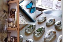 Cabinet de curiosités ©Marimerveille