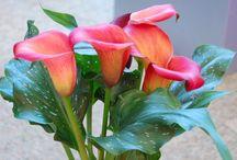 Belleza y color en las Flores Flowers / by Maria Gonzáles