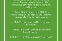 puppy facts