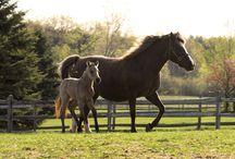 HORSE CULTURE