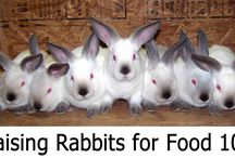 Rabbits for Meat