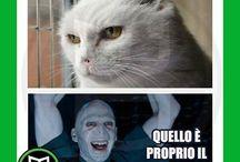 Vignette Harry Potter