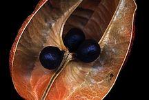 Seeds - Siemenkodat
