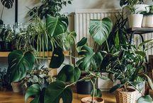 PLANTS♡