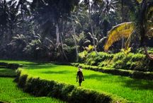 Lombok Local Life