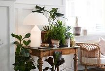 Indoor Decore