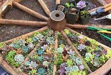Zahrada Ze Sukulentů