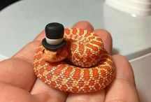Funny Reptiles / Photos that made us smile!