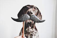 MOUSTACHE DOGS & PETS