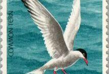 0 aves