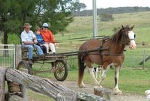 Australian Holiday Parks  / Great places to stay with the kids around Australia. / by Holidays With Kids