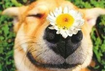 Funny animals / Cute photos of animals:)