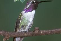 birding / by Melissa Hins