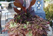 Garden Delights-BROWN Chocolate Garden / Brown Chocolate Garden / by Sassafras