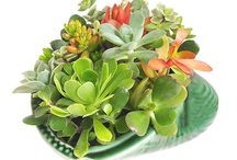 Gardens, Plants, Trees and Succulent Love / Gardens, trees, plants, succulents and all the ways to use them in and around home.