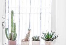 / CACTI + SUCCULENT LOVE / / Our loving obsession with anything succulent
