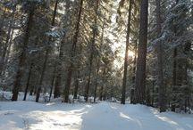 Namn skogen / Skogen i Namn