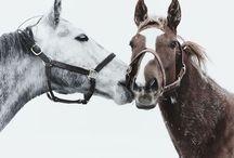 Horses / by Juli Fourman