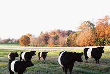 Pittsboro North Carolina / Things to do and see in Pittsboro North Carolina