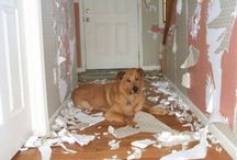 Funny pets / Pets doing outrageous and funny things. Never a dull moment.