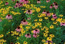 Ohio Flowers