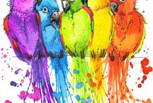 Люблю попугаев‼️‼️