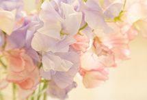 Светлая  весна  с  переходом  в  светлое  лето