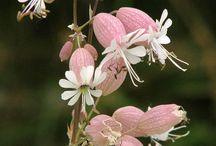 Kwiaty pink