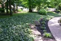 Front Landscaping / by Andrea Cole